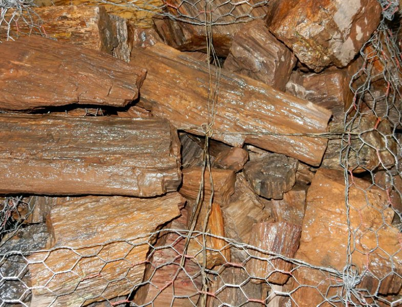 carbon dating petrified wood Find great deals on ebay for oregon petrified wood in  eocene/oligocene epoch dating it back  petrified wood rough piece / slab with carbon.