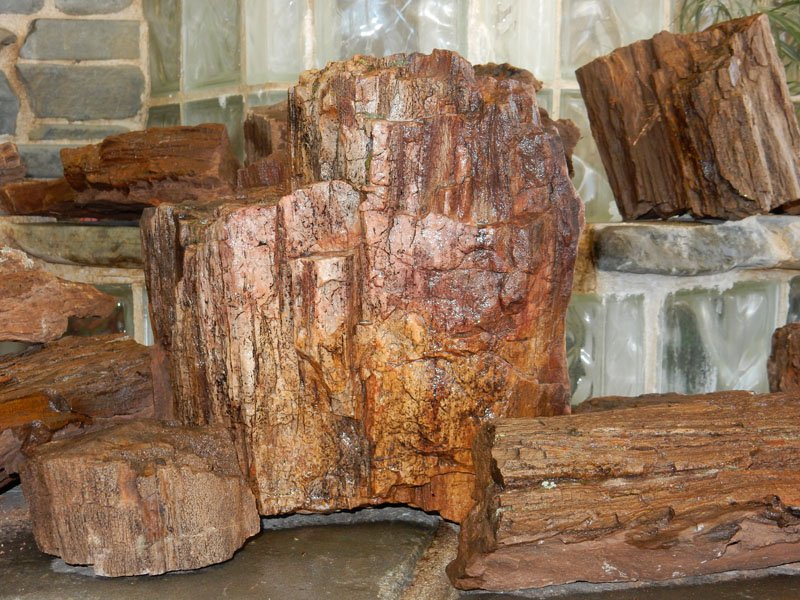 Petrified Wood High Plains Stone Company Colorado S